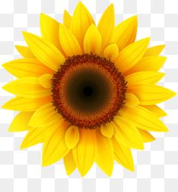 Bunga Matahari Unduh Gratis Fotografi Saham Clip Art Bunga Matahari Dengan Daun Clipart Gambar Png