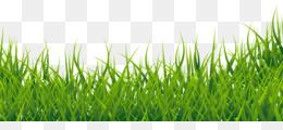 rumput hijau unduh gratis gambar klip rumput gambar png rumput hijau gambar png gambar png rumput gambar png rumput hijau gambar