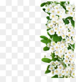 Bunga Daun Hijau Unduh Gratis Bunga Hijau Daun Cahaya Bunga