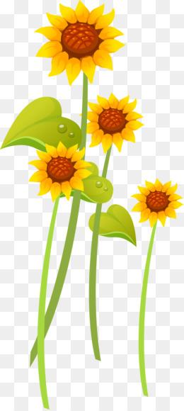 Bunga Matahari Kuning Unduh Gratis Kansas Umum Bunga Matahari Serbet Kertas Warna Kuning Bunga Matahari Gambar Png