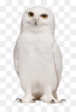 Burung Hantu Putih Unduh Gratis Burung Hantu Burung Photoscape Clip Art Burung Hantu Putih Png Gambar Gambar Png