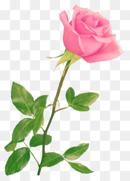 83+ Gambar Bunga Mawar Tiga Dimensi Paling Baru