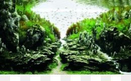Aquascaping Akuarium Desain Lansekap Gambar Png