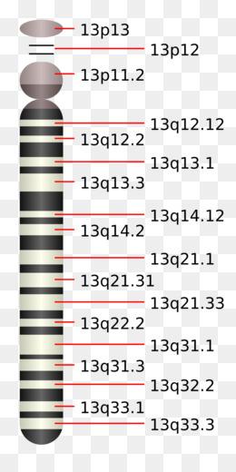 Kromosom unduh gratis - Violet Organisme - Berantakan ungu ...