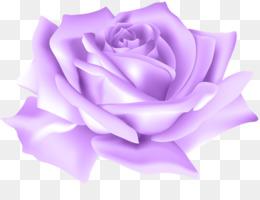 Mawar Ungu Unduh Gratis Blue Rose Ponsel Wallpaper Mawar Ungu Dengan Titik Clipart Gambar Png