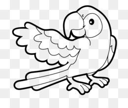 Buku Mewarnai Gambar Burung Beo Benar Gambar Png