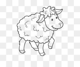 Domba Buku Mewarnai Gambar Gambar Png