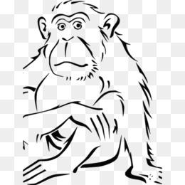 Buku Mewarnai Monyet Spider Monyet Gambar Png