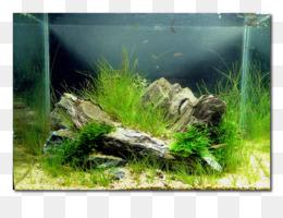Aquascaping Unduh Gratis Alam Akuarium Dunia Aquascaping Aqua Design Amano Filter Akuarium Ikan Gambar Png