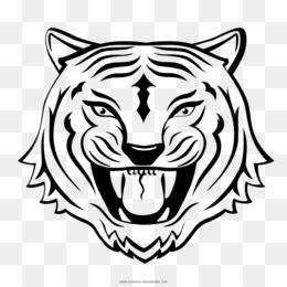Tiger Mewarnai Harimau Gambar Gambar Png