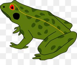 Kodok Hijau Unduh Gratis Katak Amfibi Kecebong Cane Toad