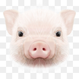 87 Gambar Babi Marah