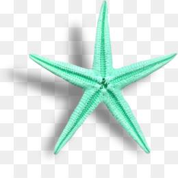 Bintang Laut Gambar Buku Mewarnai Gambar Png