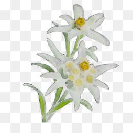 Bunga Gambar Bunga Sederhana Gambar Gambar Png