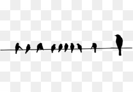 Burung Burung Beo Buku Mewarnai Gambar Png